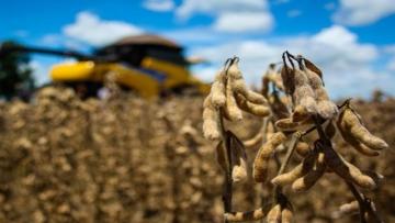 Exportação de soja cresce e passa celulose na balança comercial de MS