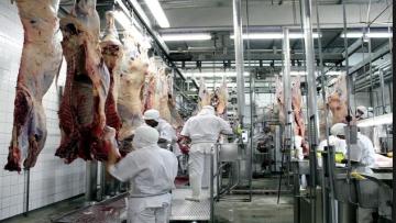 MS deixou de abater quase 16 mil cabeças de gado no primeiro trimestre do ano